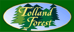tolland_forest
